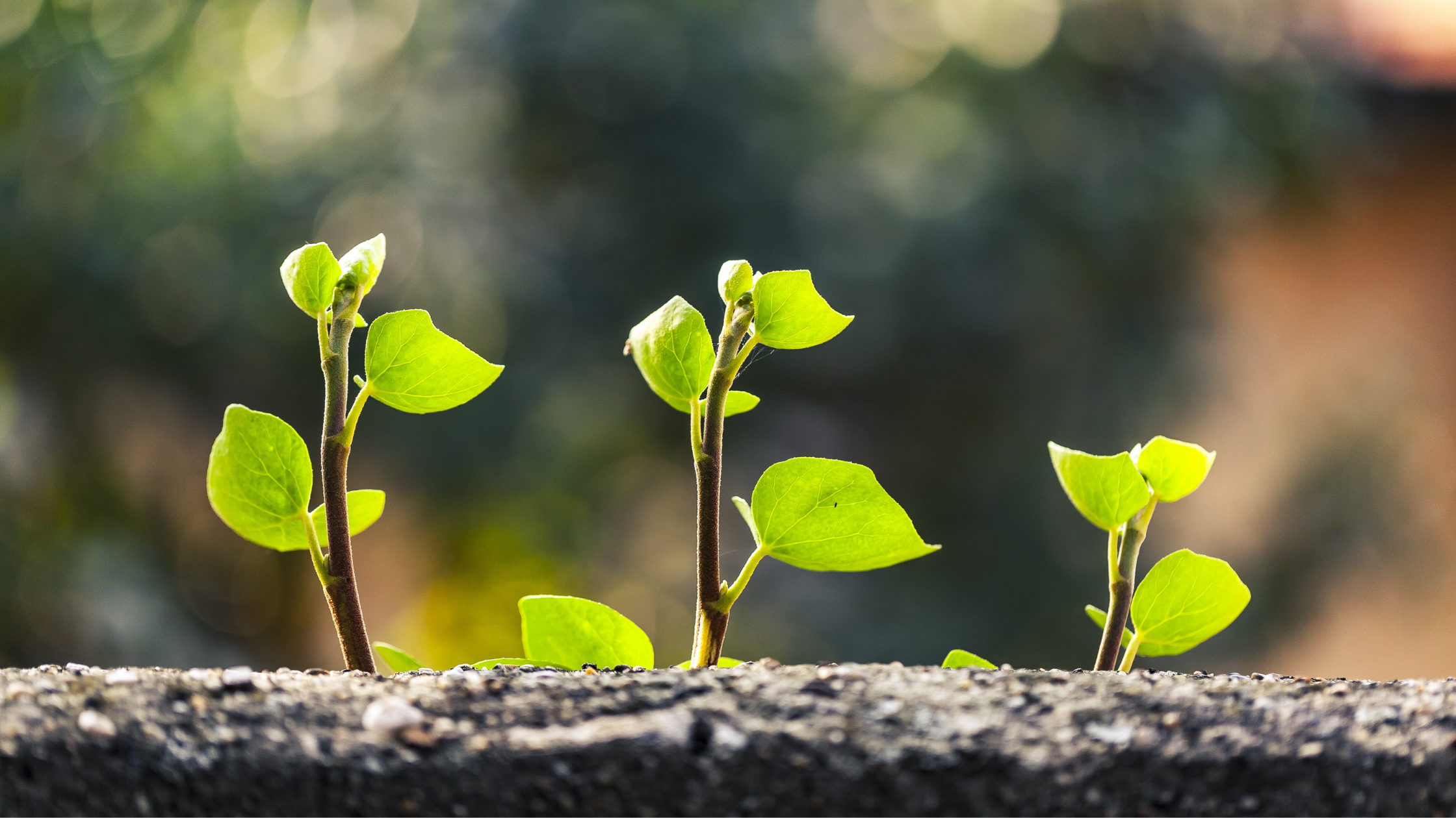 How Expanding Your Database Can Grow Your Business